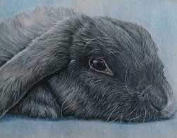 """""""Gray Bunny"""" Colored Pencil on Paper, 8""""x10"""", SOLD"""