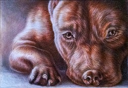 """""""Brown Pitbull Close Up"""", 5""""x7"""", Colored Pencil on Paper, SOLD"""
