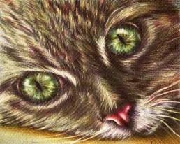 https://www.etsy.com/listing/234760204/cat-close-up-drawing-8x10-cat-art-print?ref=shop_home_active_1