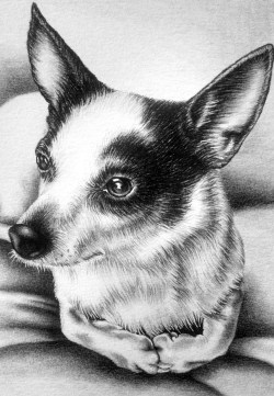 """""""Resting Chihuaua"""" 5""""x7"""" Graphite Pencil on Watercolor Paper, SOLD"""