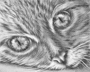 https://www.etsy.com/listing/228647692/cat-face-coloring-book-pages-adult?ref=shop_home_active_3