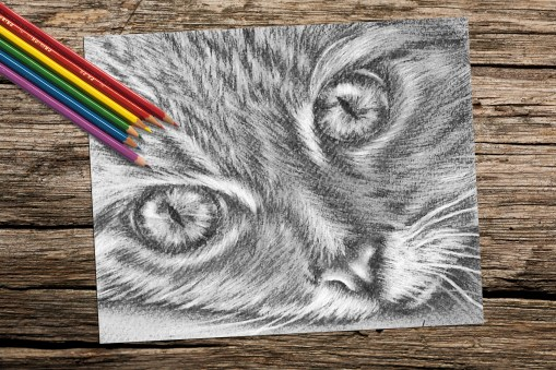 https://www.etsy.com/listing/228647692/cat-face-coloring-book-page-adult?ref=shop_home_active_15