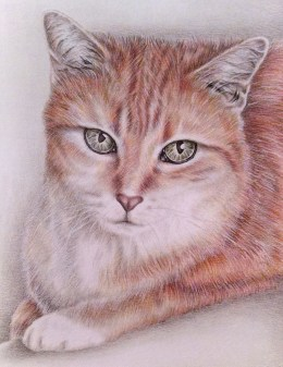 """Sitting Tabby Cat"" 8""x10"", Colored Pencil on Paper, SOLD"