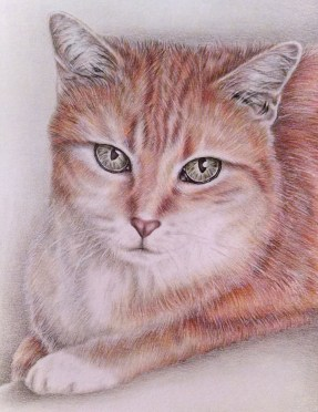 """""""Sitting Tabby Cat"""" 8""""x10"""", Colored Pencil on Paper, SOLD"""