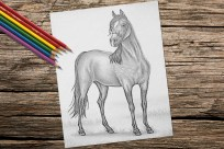 https://www.etsy.com/listing/260862115/horse-animal-coloring-book-page-adult?ref=shop_home_active_1