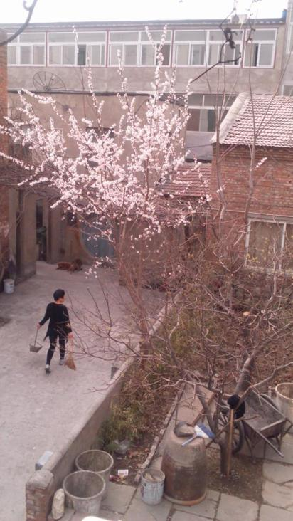 Spring in Beijing from the studio window, Red Gate studio # 6 at Feijiacun (费家村) village, April 2015. The location of these studios is north east of the city centre outside the fifth ring road.