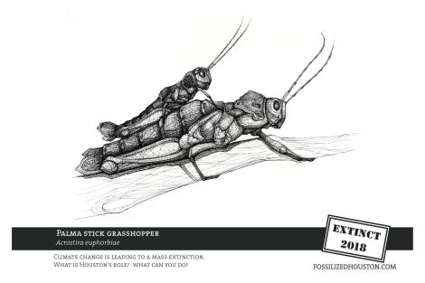 Grasshopper - Fossilized in Houston