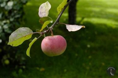 _apple_alone4520p