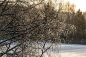 icy_tree_0180p
