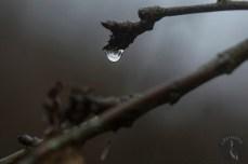 raindrop_0030p