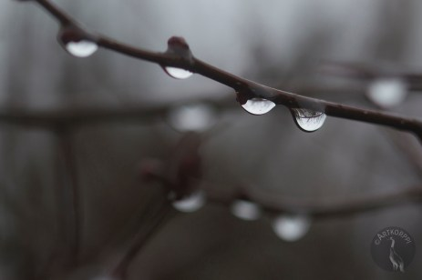 raindrops_0045p