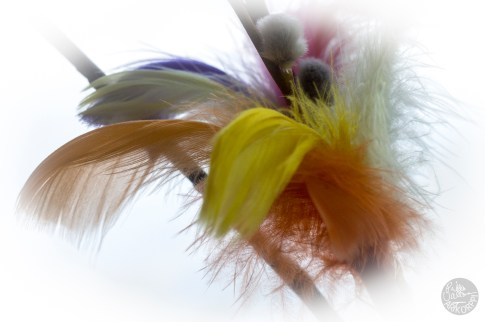 feather_0135p