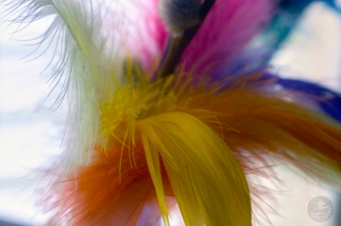 feathers_0111p