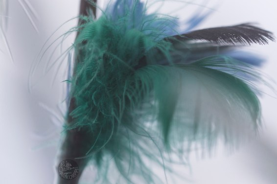 feathers_0127p
