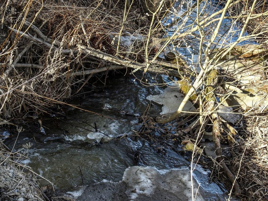 stream_1296p