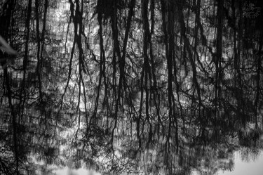 MM3_1trees_reflects_0038p