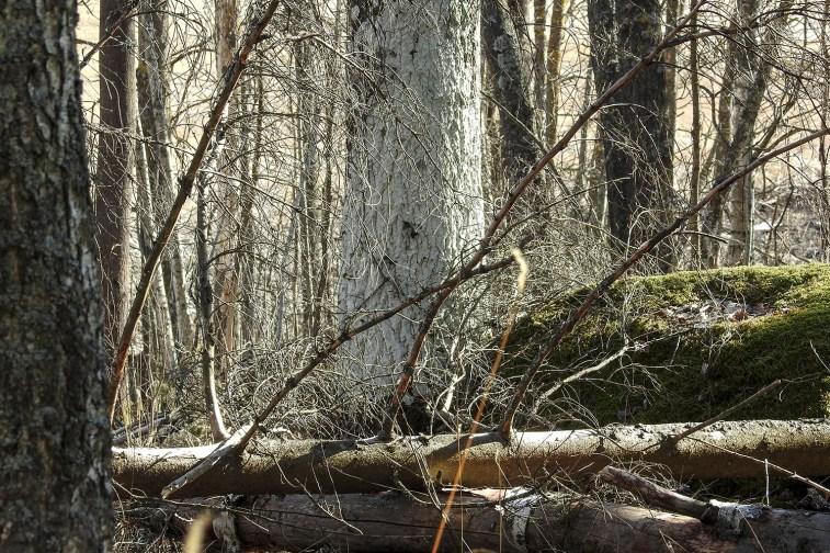 old_trees_islet2063p
