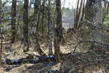 old_trees_islet2066p