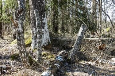 old_trees_islet_2068p