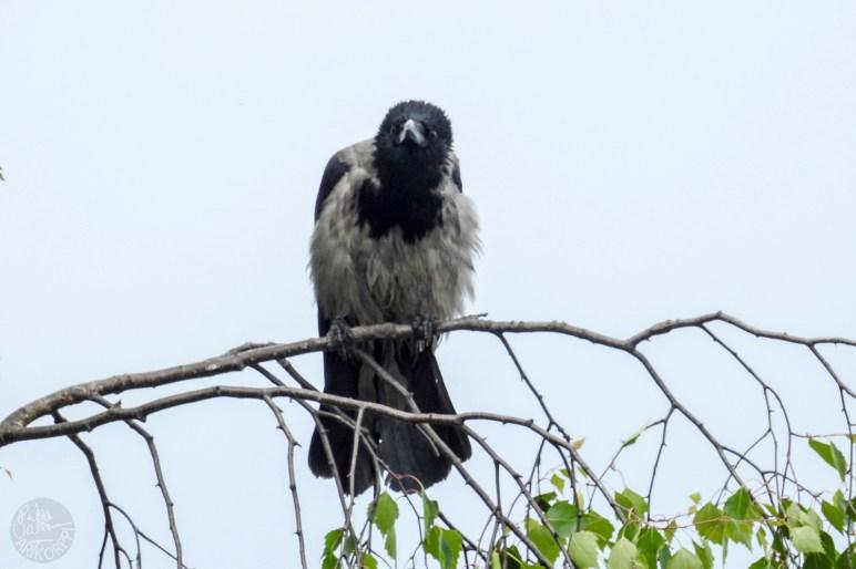 lookup_crow3434p