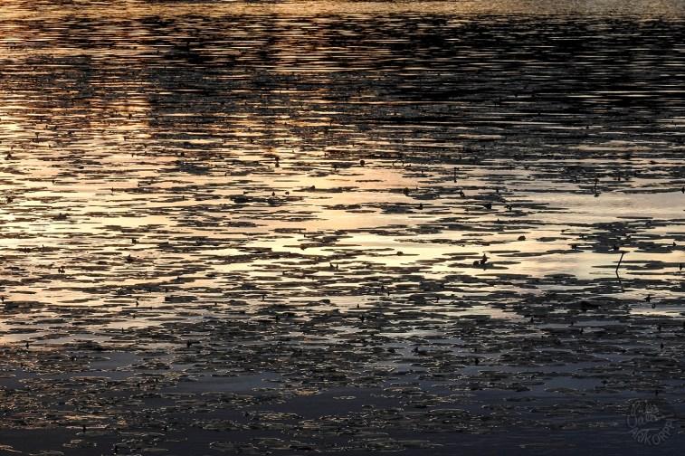 water_sunset5416p