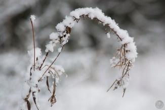 luminen_0193p