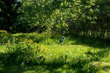 omenapuut_0099p