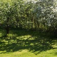 Wild Garden / Villi puutarha