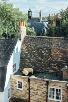 Rooftop grazing