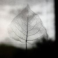 Drawing with Light: The Photographs of Olive Cotton