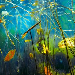 Aquatic-Wonder