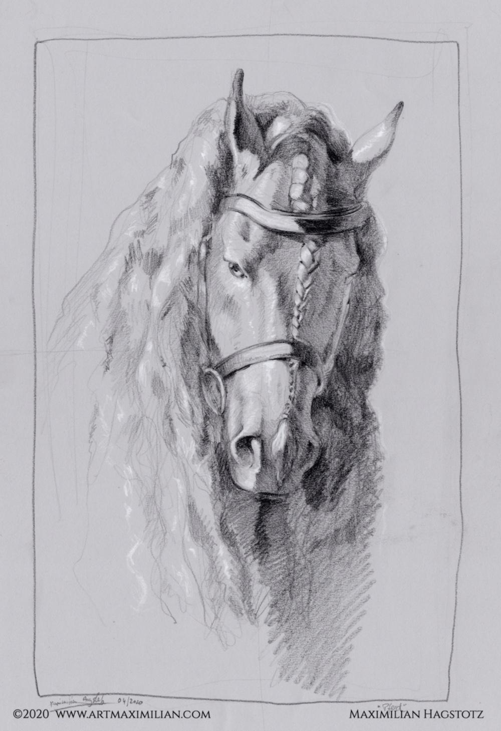 Frise Pferd schwarzweiß mahne schön Porträt Rasse Hengst Zeichnung Kunst Grafik kreide Maximilian Hagstotz Halfter Zaumzeug Geschenkidee Mann Frau