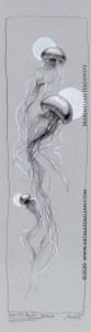 Qualle Wasser Kunst Zeichnung Grafik neu Mond Weiß schwarz aqua lang licht Deko set Wandkunst Galerie Maximilian Hagstotz Grafik Geschenkidee