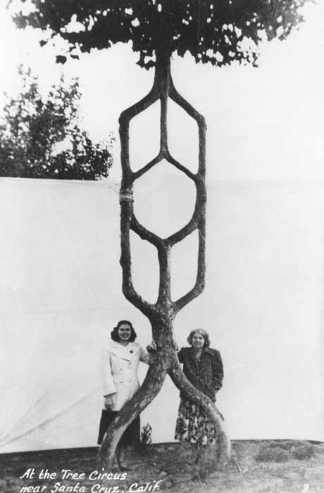 """Посетительницы калифорнийского """"Цирка деревьев"""", основаного Акселем Эрландсоном"""