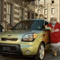 hamsters-car