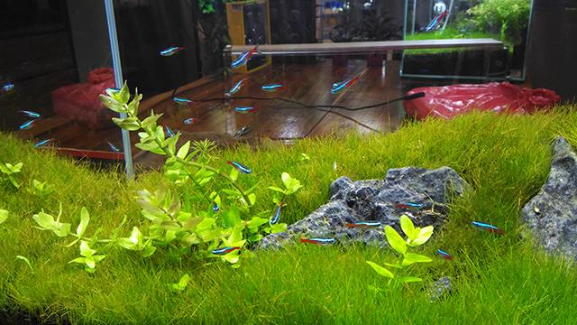 hobbes and landes lego corner bgc taguig lifestyle mommy blogger www.artofbeingamom.com 18