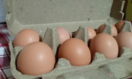 Healthy Options: All Natural Free Range Eggs