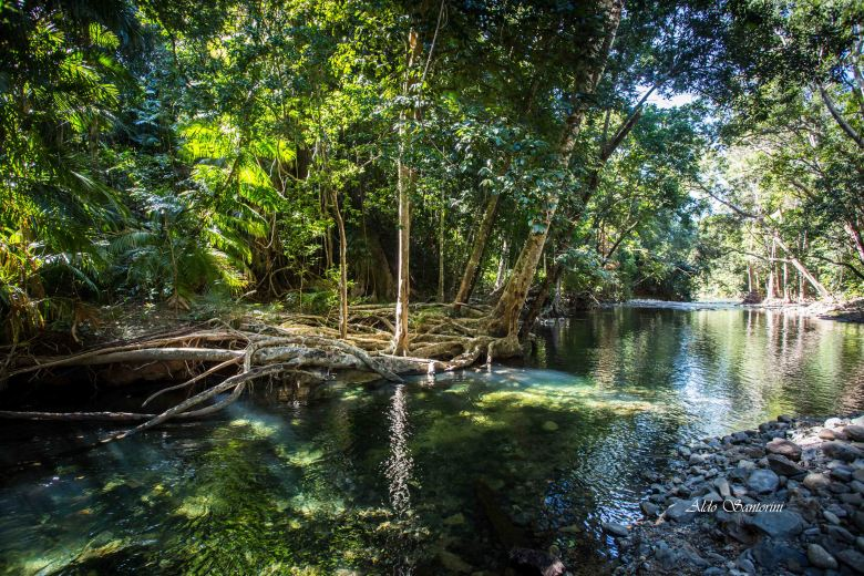 A creek in the Daintree
