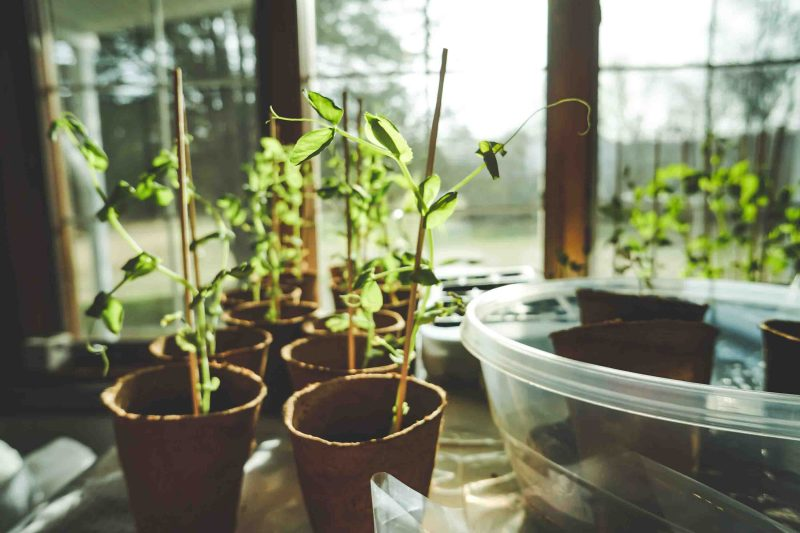 Keeping active during the pandemic with plants