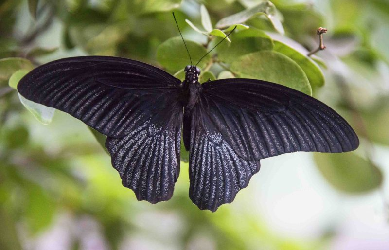 butterfly - manage anger and pain