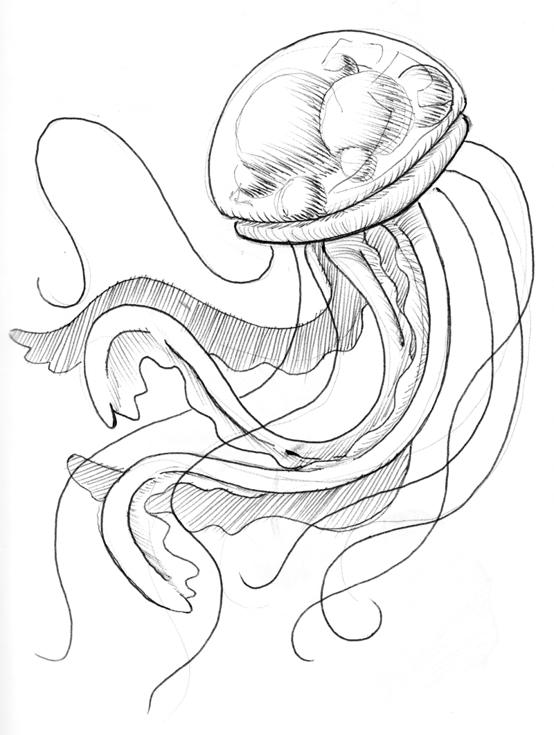 drawings of jellyfish coloring page together with heart addition