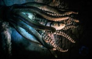 octopus-2745286_1920