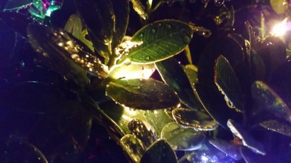 As the white lights shone through the leaves, they gave off an angelic glow.