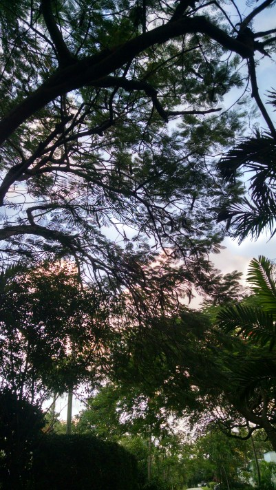 A canopy of trees shielded us from the sun even as it set.