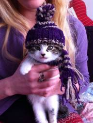 Knitted Kitten! YES, Hollie made this! How cute!