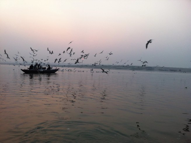 ganga-river-bird