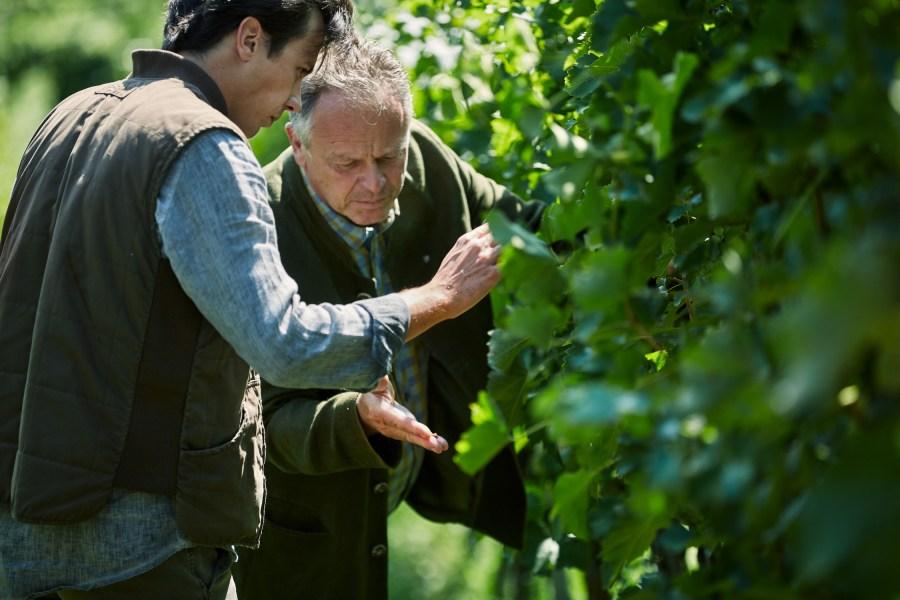 Vater und Sohn im Weinberg