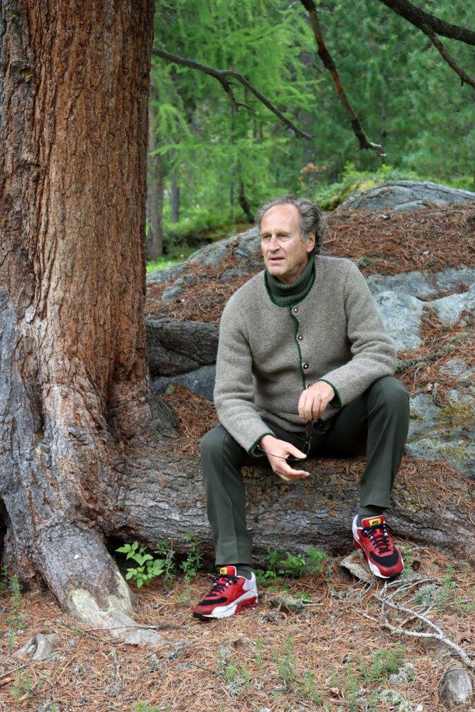 Die Arve oder Zirbe, ein beeindruckender Baum, der auch mal 1000 Jahre alt werden kann