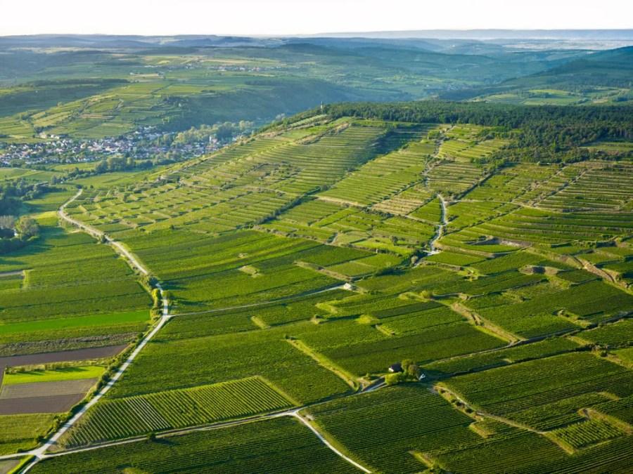 Größtenteils in Terrassen angelegt und fernab von jedem Autoverkehr sind die zum Weingut Bründlmayer gehörenden Weingärten in der Vielfalt ihrer Böden und kleinklimatischen Verhältnissen einmalig.