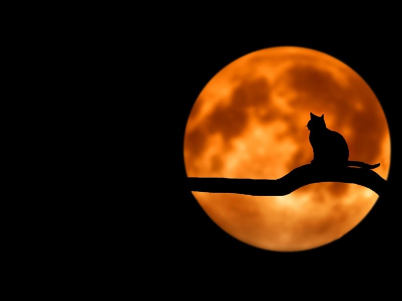 Best Short Stories for Halloween